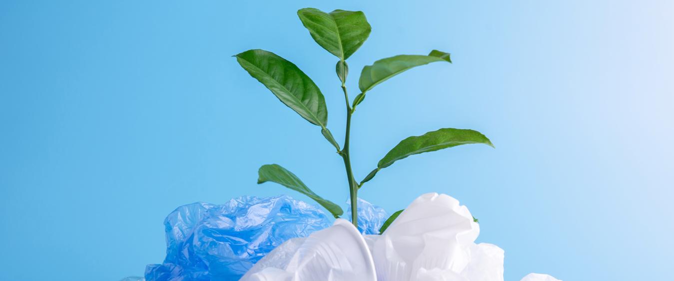 Environmentally Friendly Sustainable